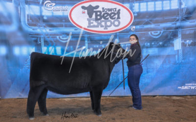 H Maine Angus Res 19