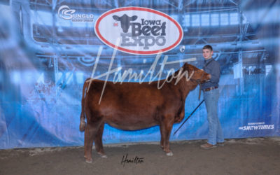 H Red Angus Res 19