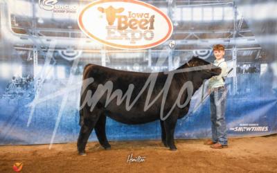 Champion High % Simmental Heifer