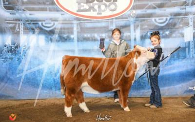 Champion Mini Hereford Heifer