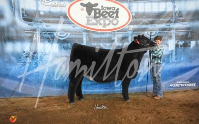 Reserve Champion High % Maine Heifer