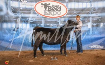 Reserve Champion Limousin Heifer