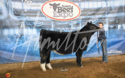 Reserve Champion Mainetainer Heifer