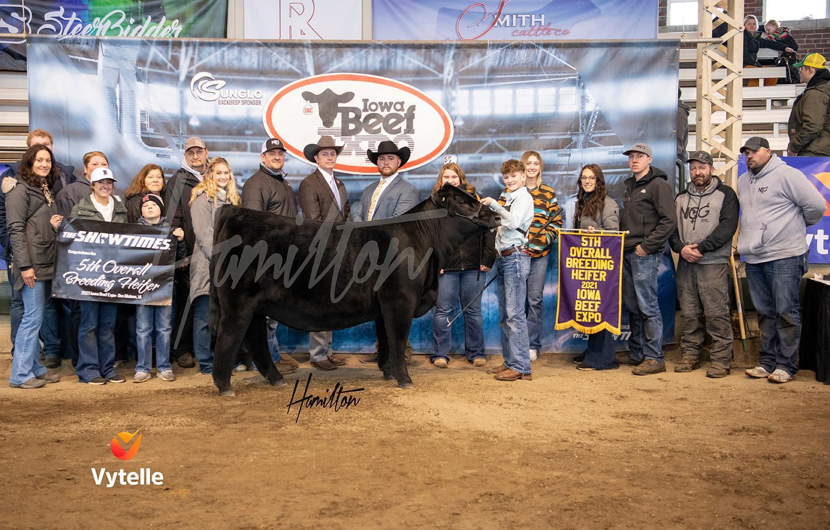 5th Overall Breeding Heifer