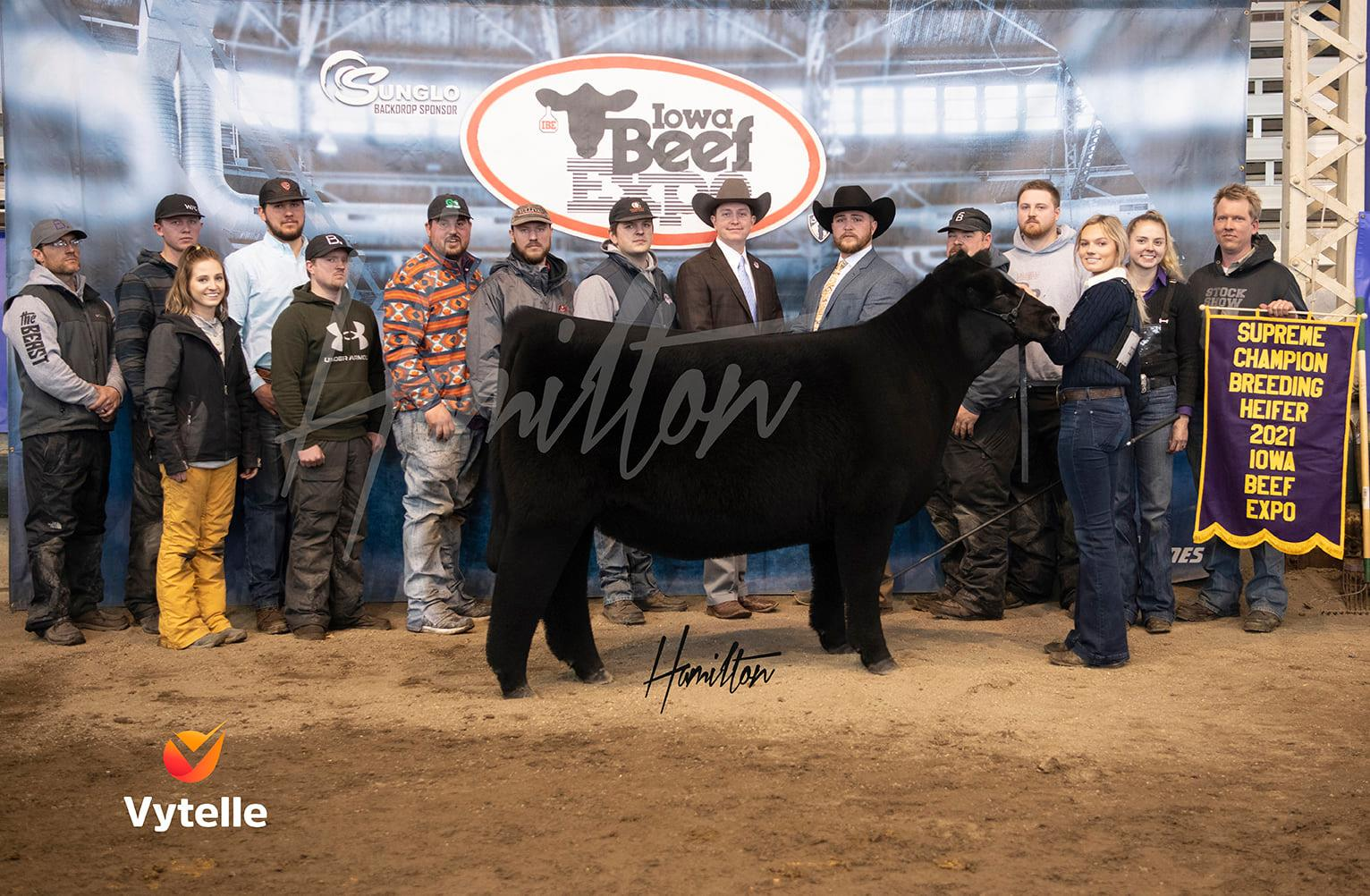 Grand Champion Heifer