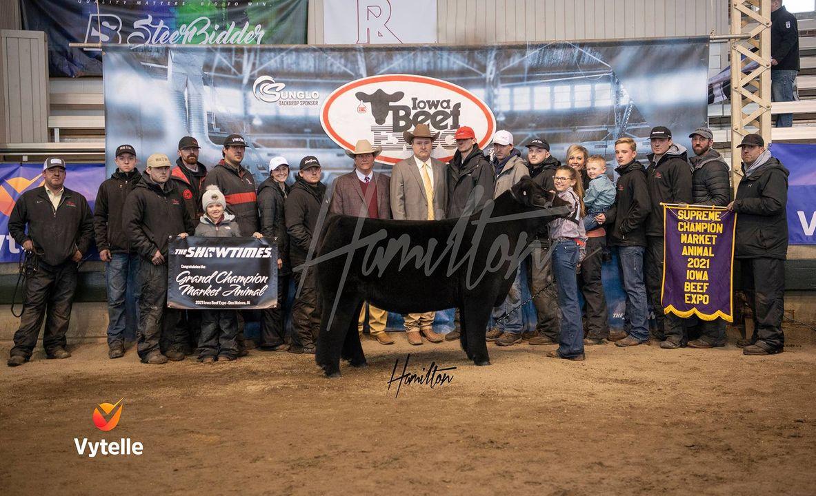 Champion Market Steer